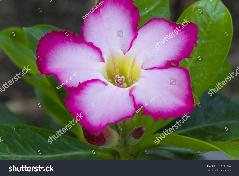 Desert Flower Names Stock Photo Edit Now 602036774 Shutterstock