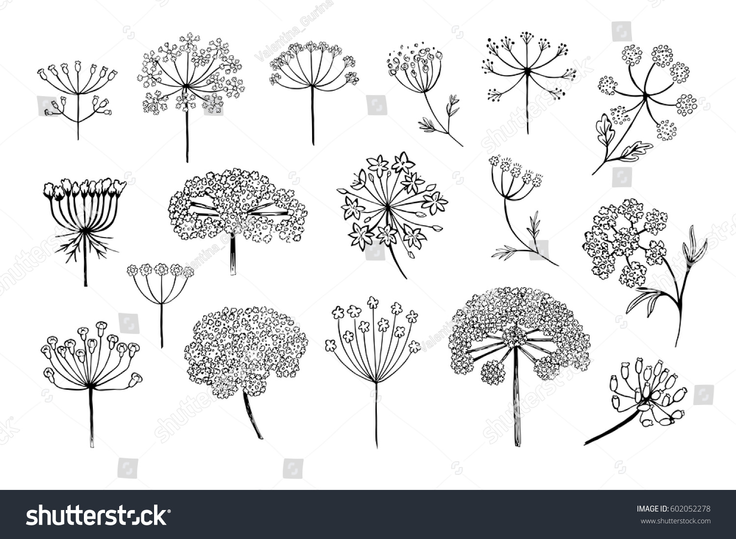 Set Vector Different Types Inflorescence Isolated Stock Vector