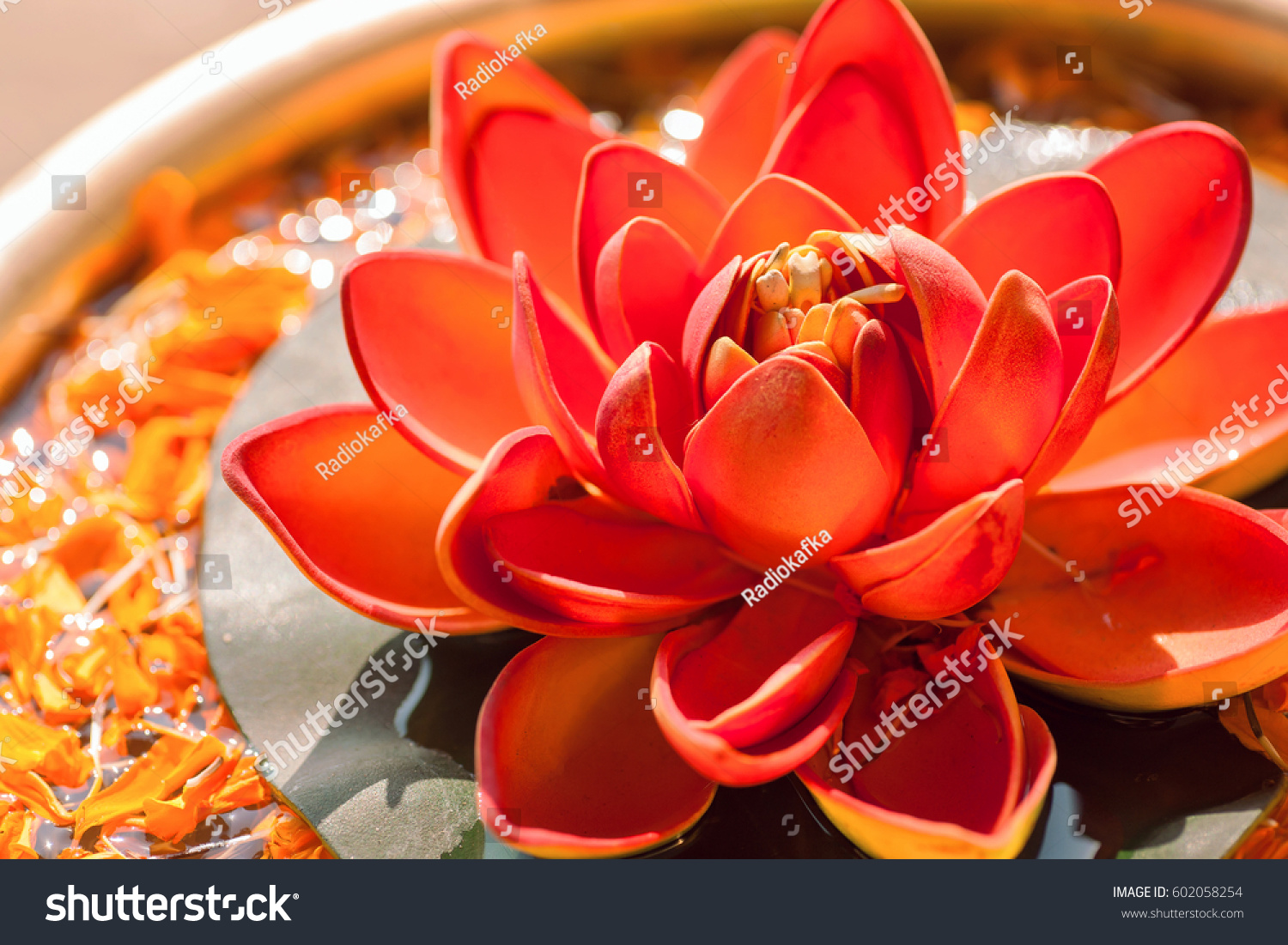 Beautiful Red Color Nelumbo Flower Known Stock Photo Edit Now