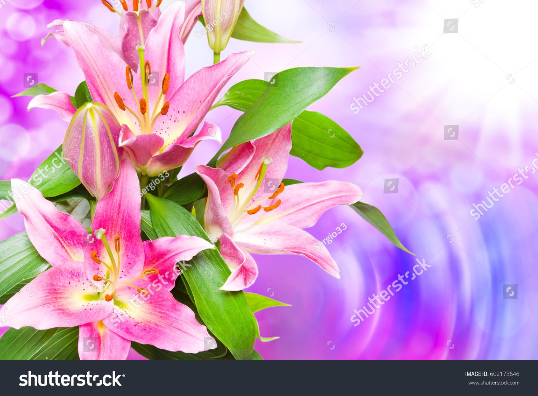 Close beautiful pink lilies flowers stock photo edit now 602173646 close up of beautiful pink lilies flowers izmirmasajfo