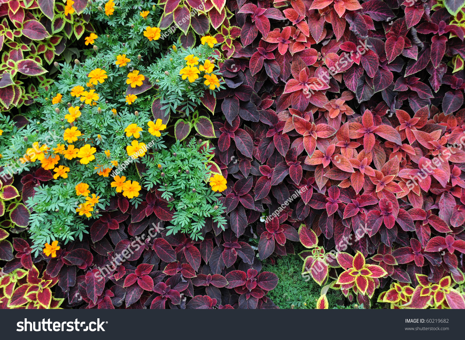 Closeup design of ground covering plants and ornamental for Design of ornamental plants