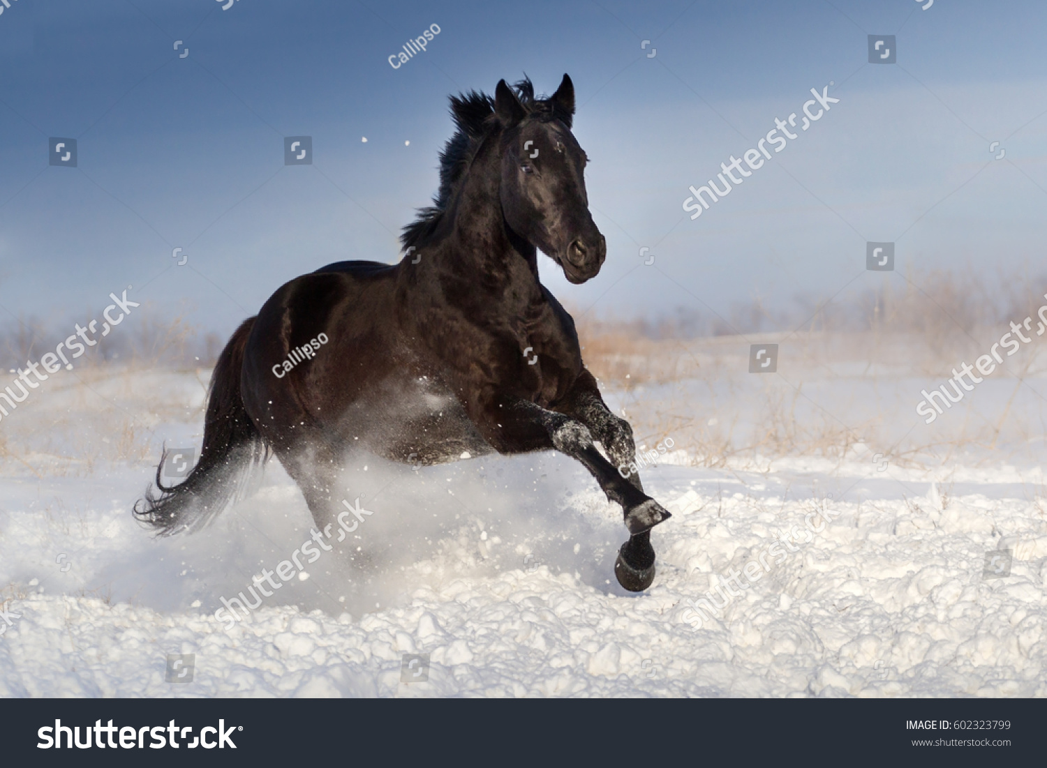 Black Horse Jump On Snow Winter Foto De Stock Editar Ahora 602323799