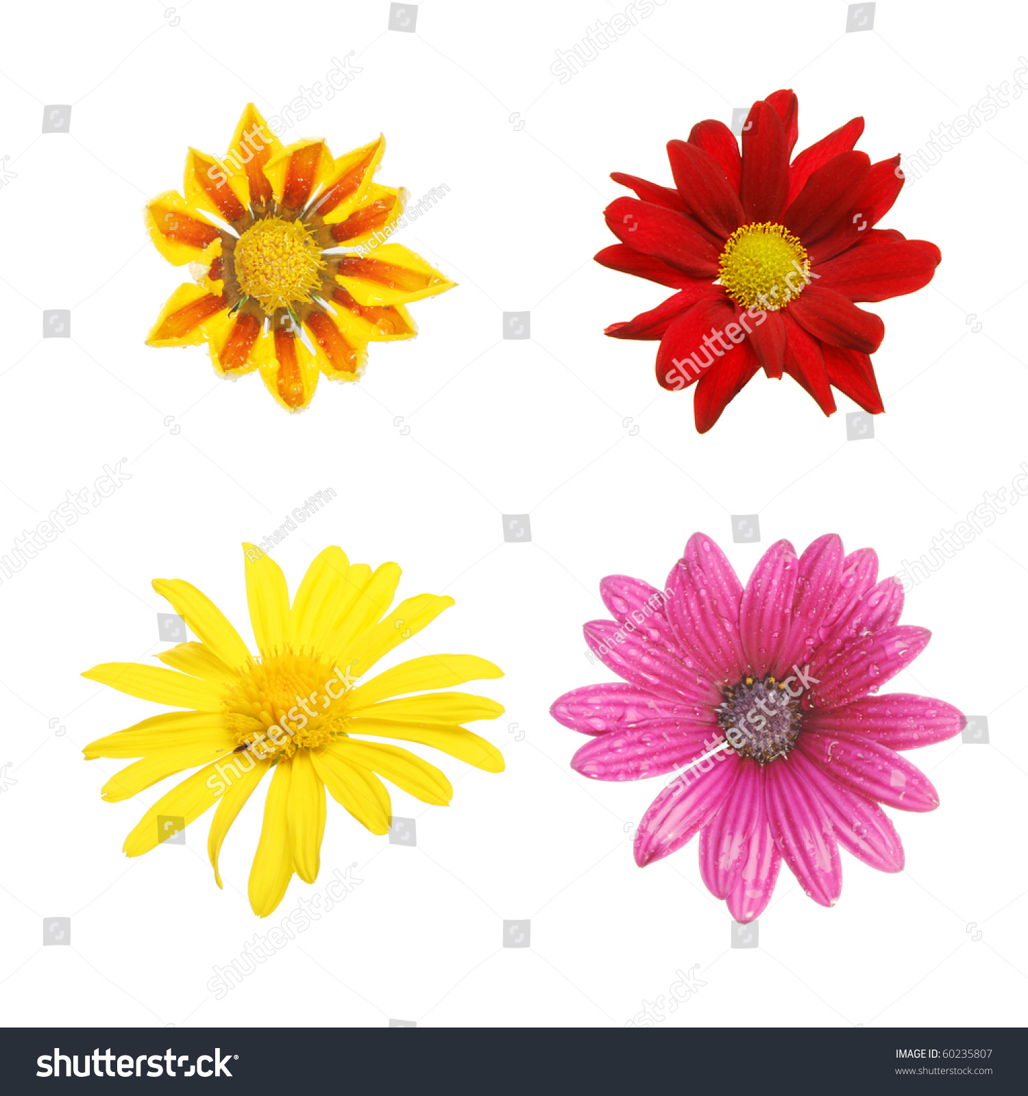 Collection four daisy type flowers stock photo edit now 60235807 collection of four daisy type flowers izmirmasajfo