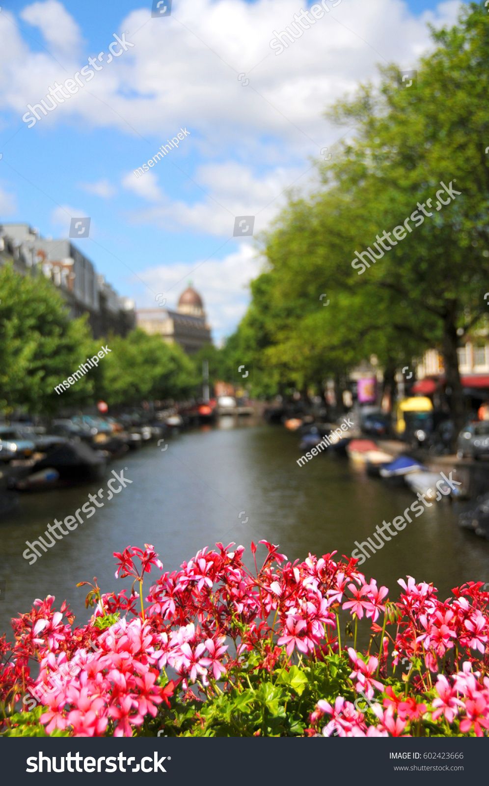 Spring View Amsterdam Fresh Pink Flowers Stock Photo Safe To Use