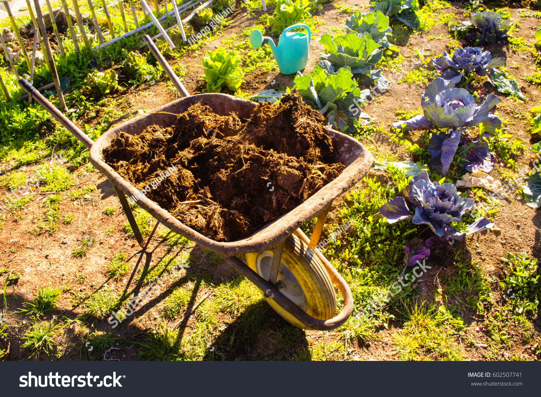 Manure Vegetable Garden Stock Photo & Image (Royalty-Free) 602507741 ...