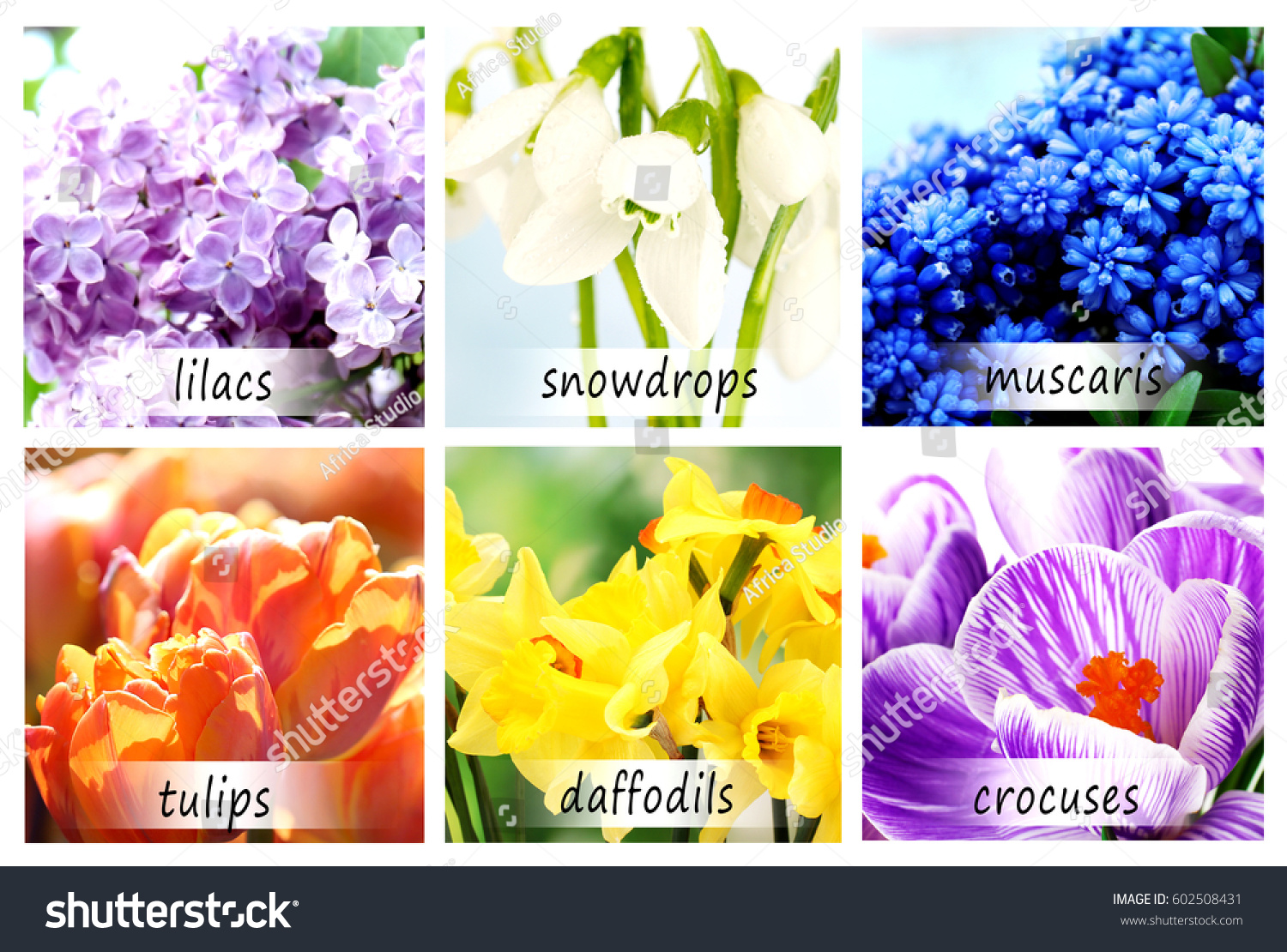 Collage beautiful flowers names stock photo edit now 602508431 collage of beautiful flowers with names izmirmasajfo