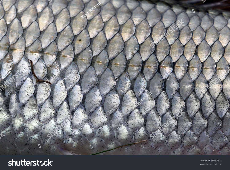 Fish scales macro fallfish stock photo 60253570 shutterstock for Get fish scale