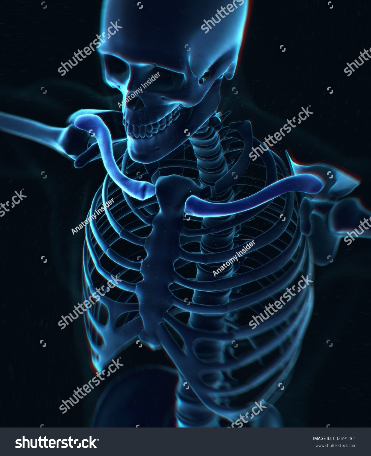Collar Bone Xray Human Anatomy Skeletal Stock Illustration 602691461