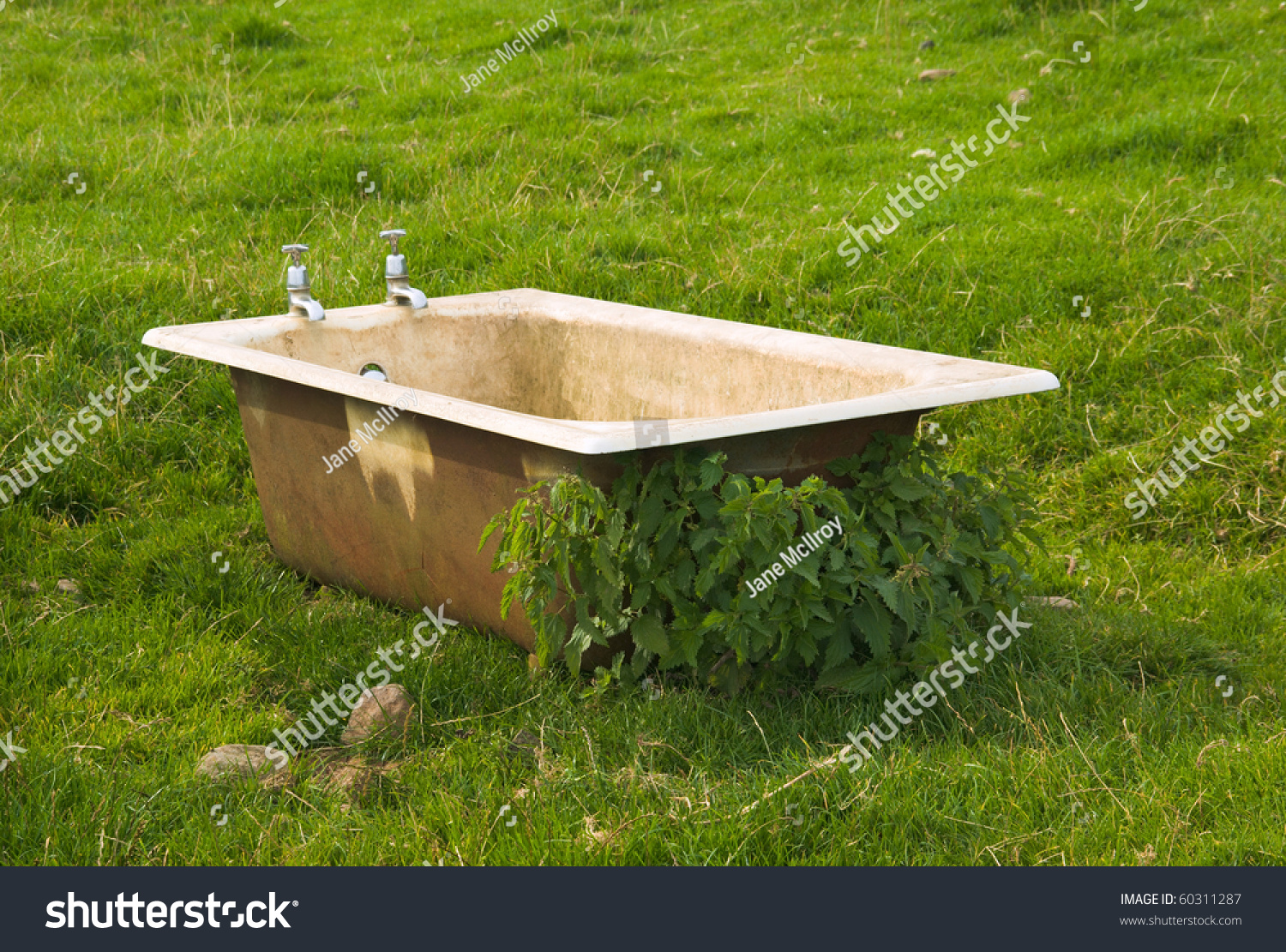 Dirty Old Bath Tub Abandoned Field Stock Photo (Edit Now)- Shutterstock