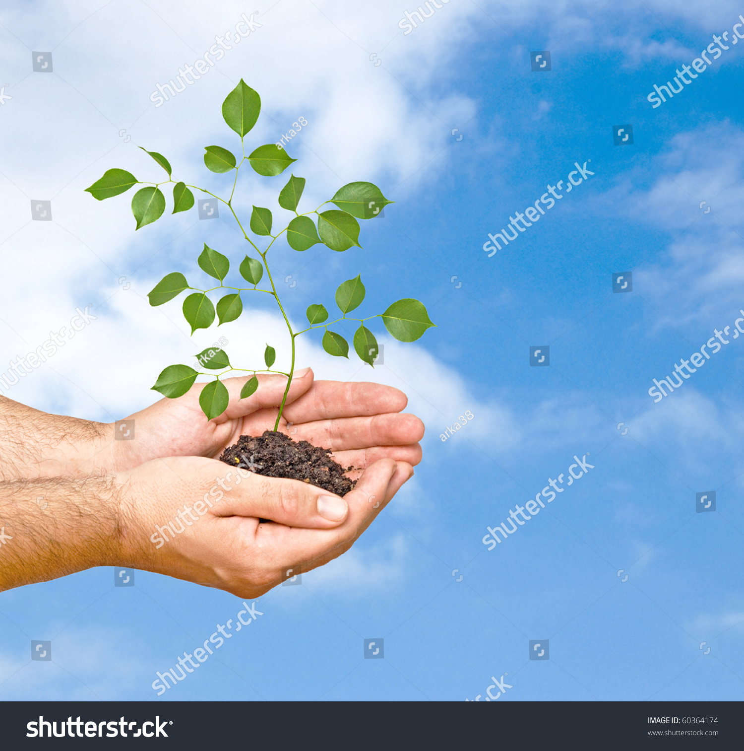 Tree seedling hands symbol nature protection stock photo 60364174 tree seedling in hands as a symbol of nature protection biocorpaavc