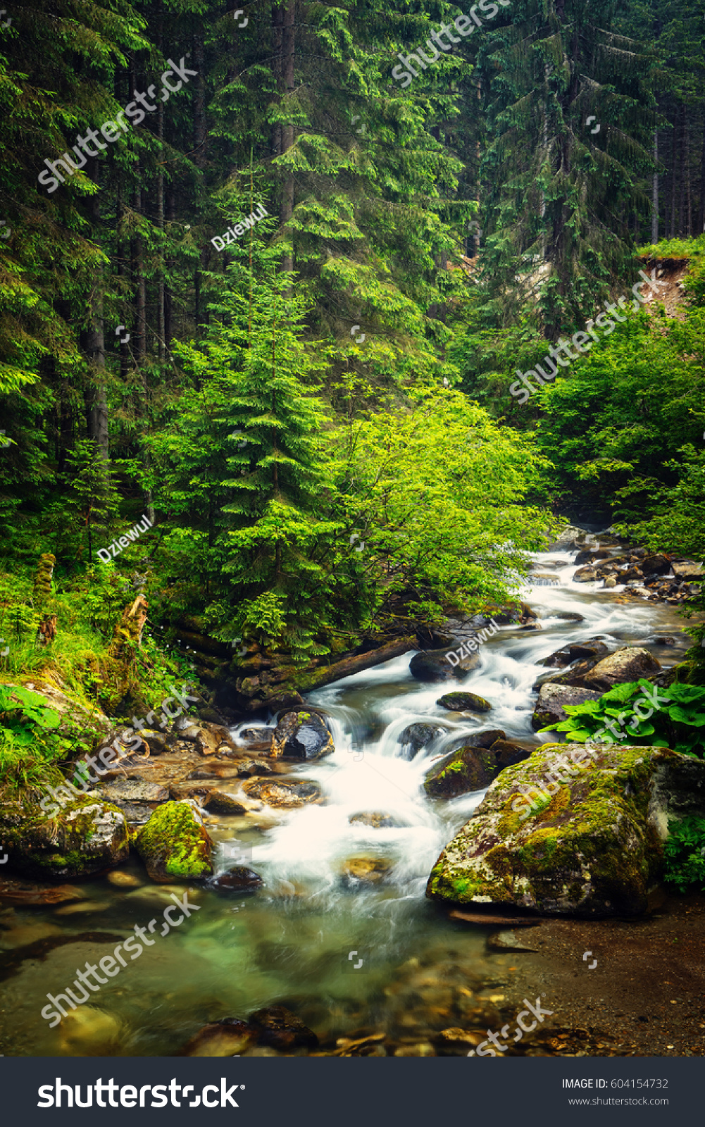 Nature Ireland S Wild River Nature Ireland S Wild River