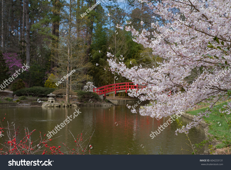 Sarah P Duke Botanical Gardens Spring Stock Photo & Image (Royalty ...