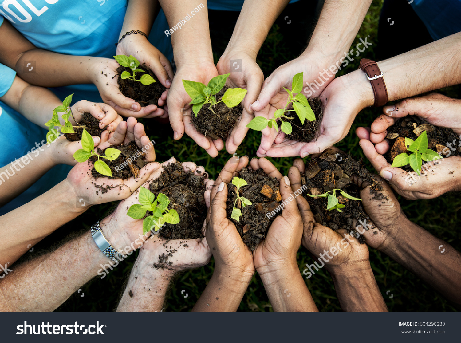 People Hands Cupping Plant Nurture Environmental #604290230