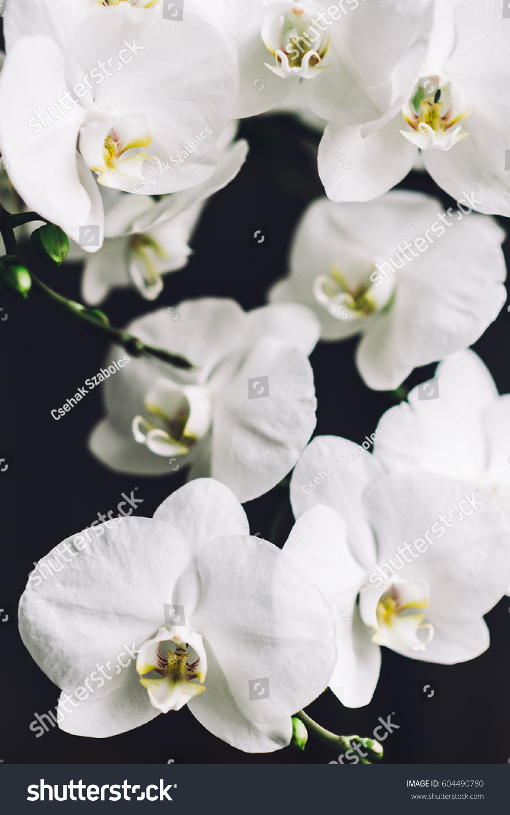 Bunch White Orchid Flowers Close On Stock Photo Royalty Free