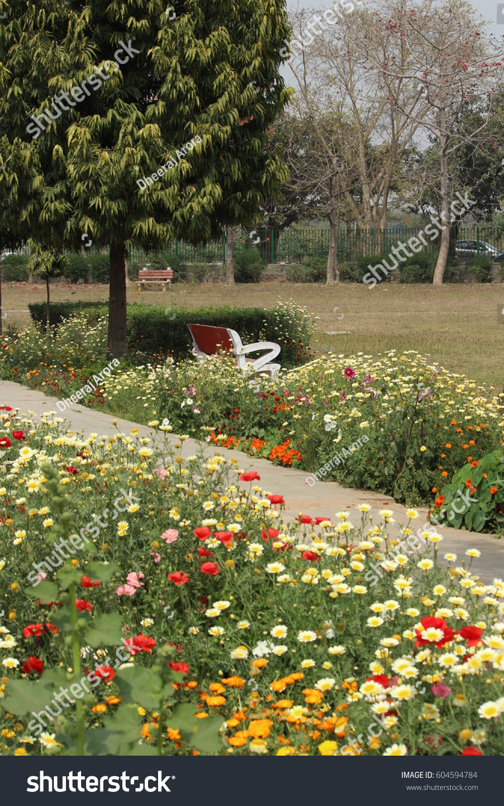 Colorful Spring Flowers Japanese Park Rohini Stock Photo Edit Now