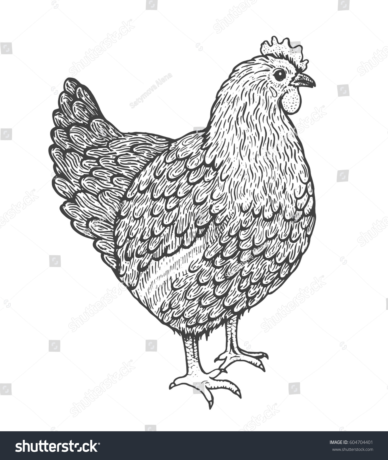 Line Drawing Hen : Sketch illustration hen line art style stock vector