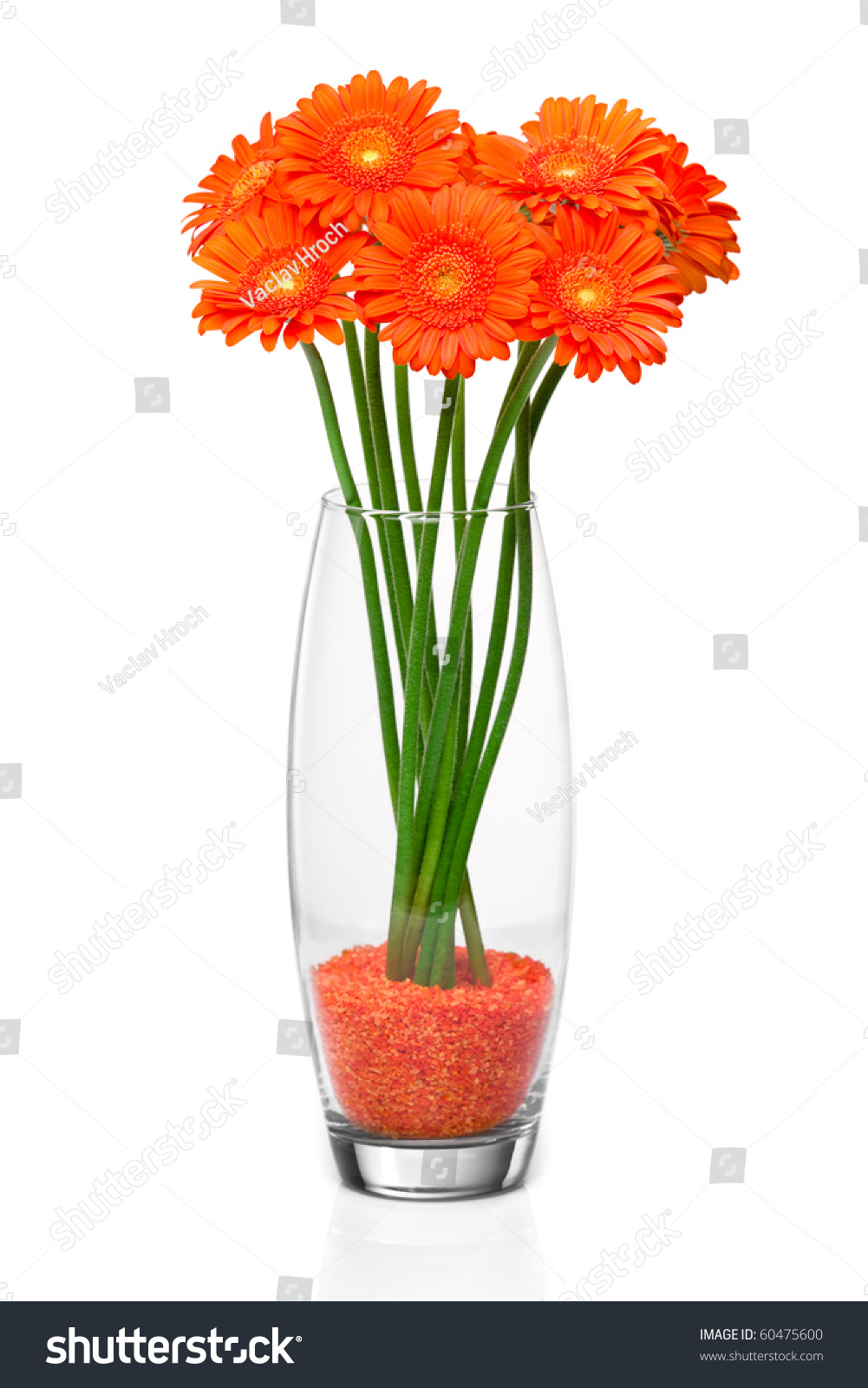 Orange gerbera flower vase stock photo 60475600 shutterstock orange gerbera flower in vase reviewsmspy