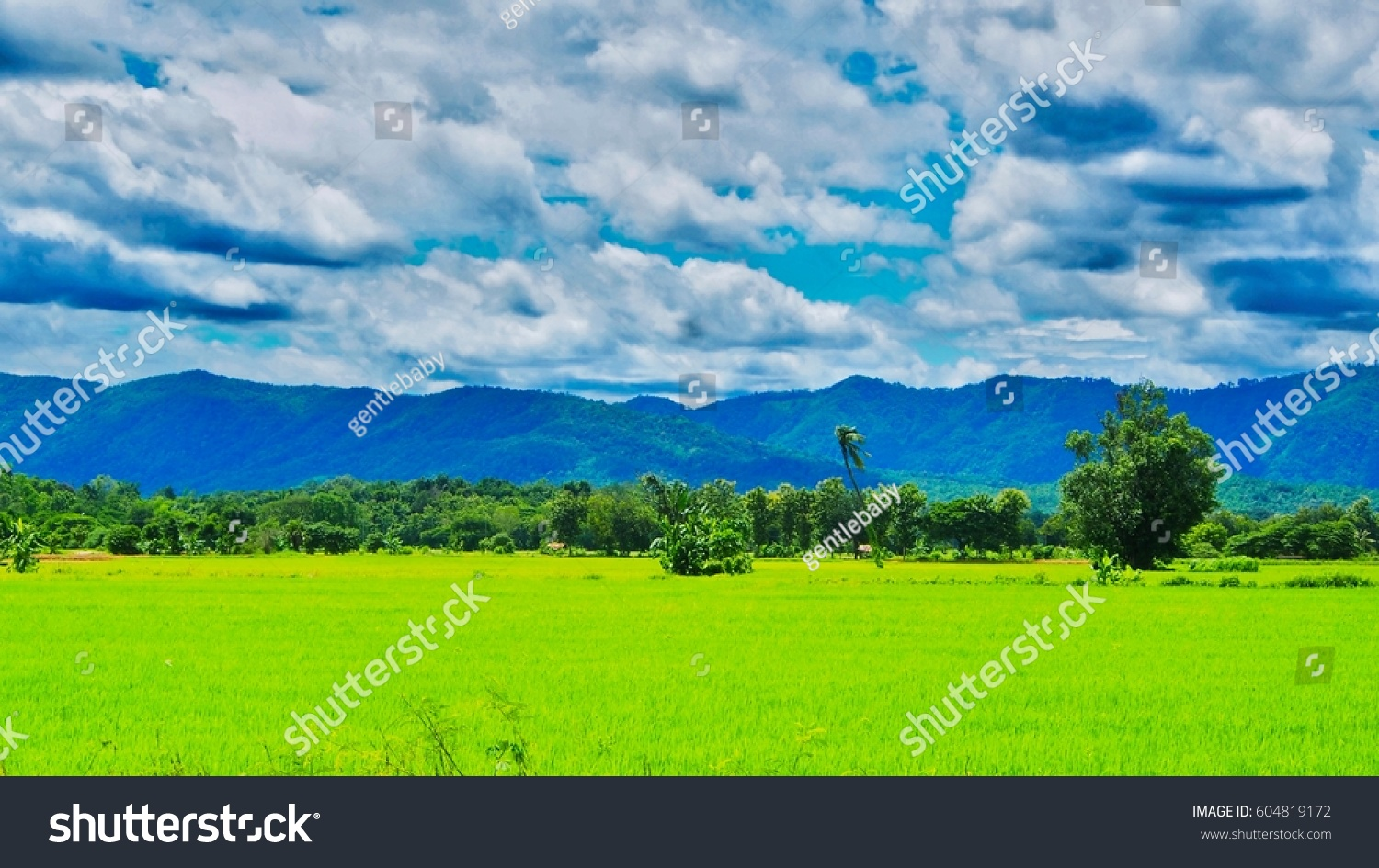 Hdr landscape thailand green rice field stock photo 604819172 hdr landscape of thailand green rice field mountain and cloudy sky nature background thecheapjerseys Image collections