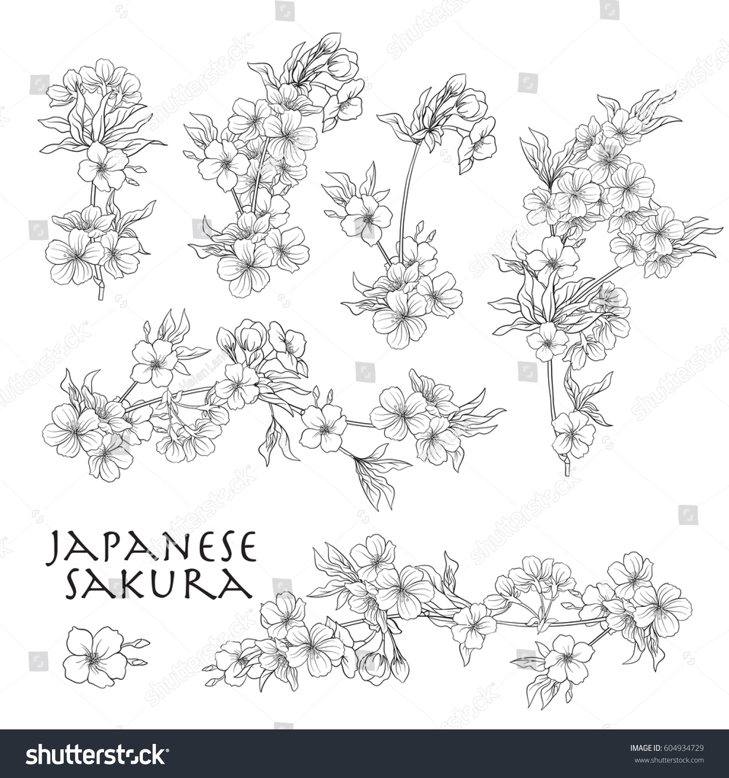 Branch Cherry Blossoms Japanese Vector