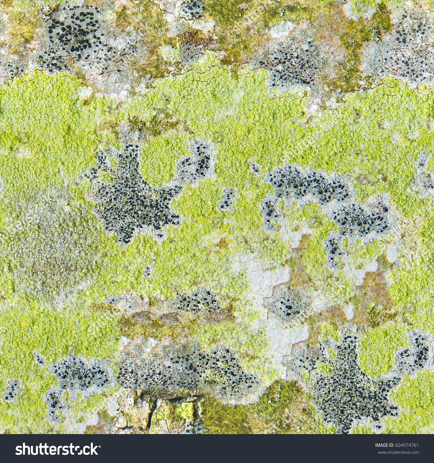 Seamless Abstract Background Multicolored Patches Lichens Stock ...