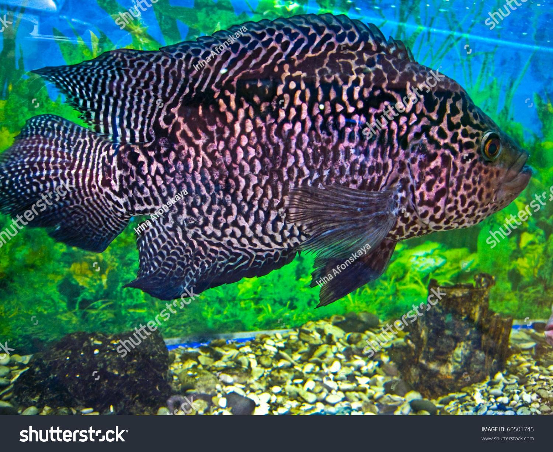 Fish aquarium white spots - Save To A Lightbox