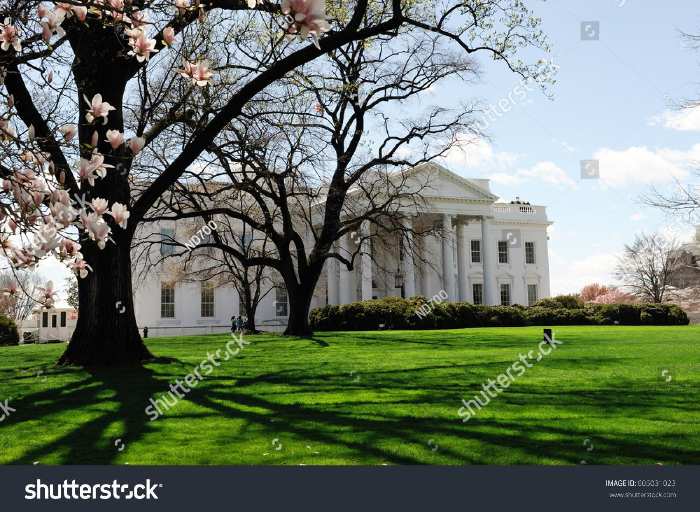 White House Spring Magnolia Flower Blossom Stock Photo Edit Now