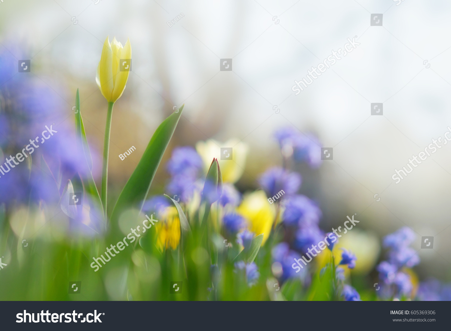 Spring Easter Background Beautiful Flowers Garden Stock Photo Edit