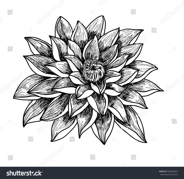 Hand drawn sketch lotus flower isolate stock vector 605396042 hand drawn and sketch lotus flower isolate on white background izmirmasajfo