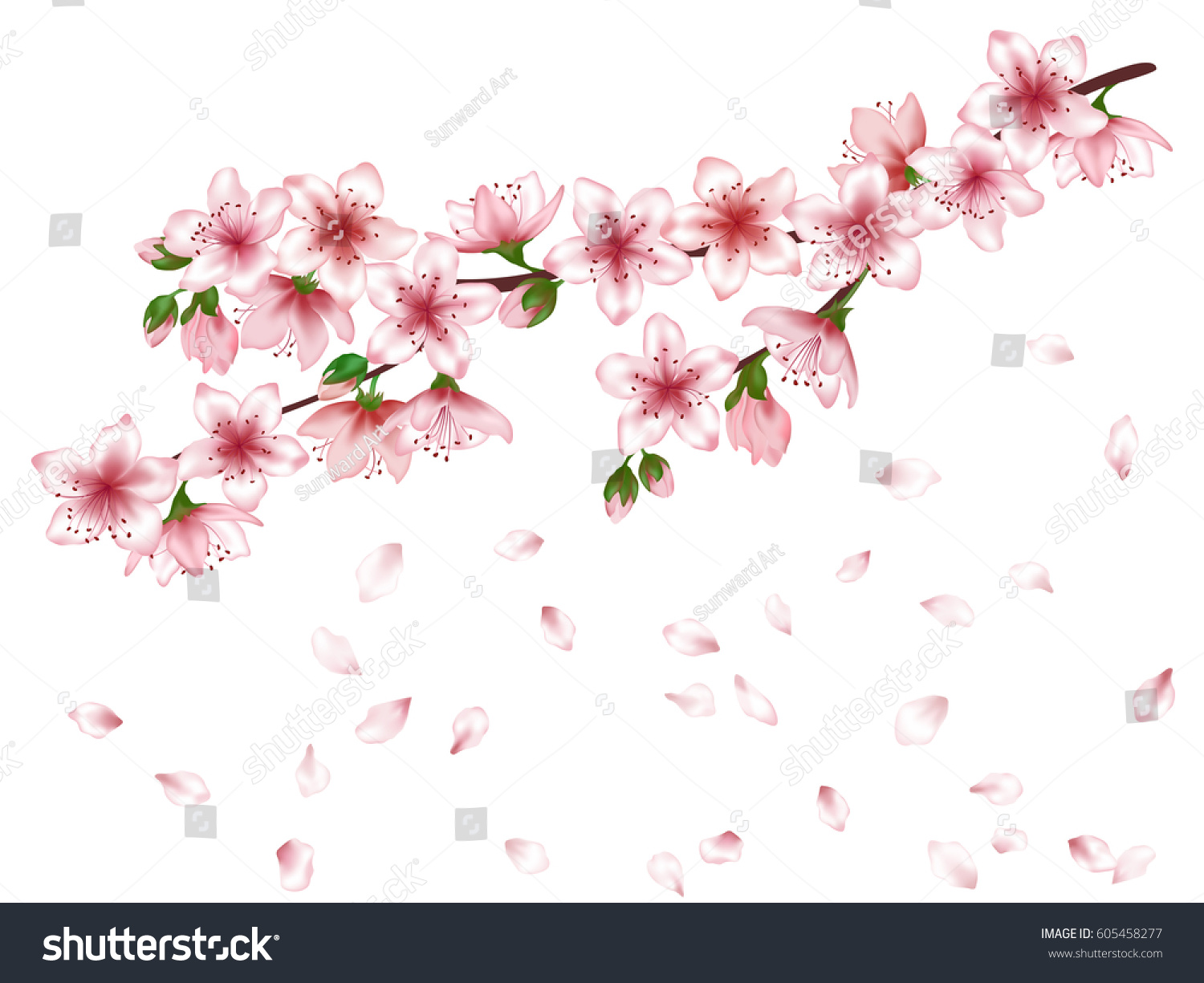 Vector Sakura Japanese Cherry Blossom Tree Stock Vector 605458277 ...