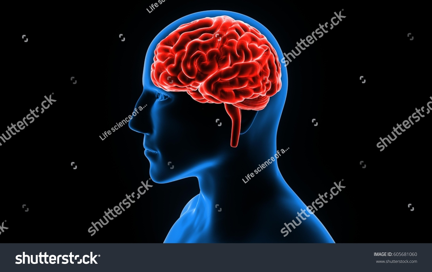 3 D Illustration Human Brain Anatomy Organs Stock Illustration ...
