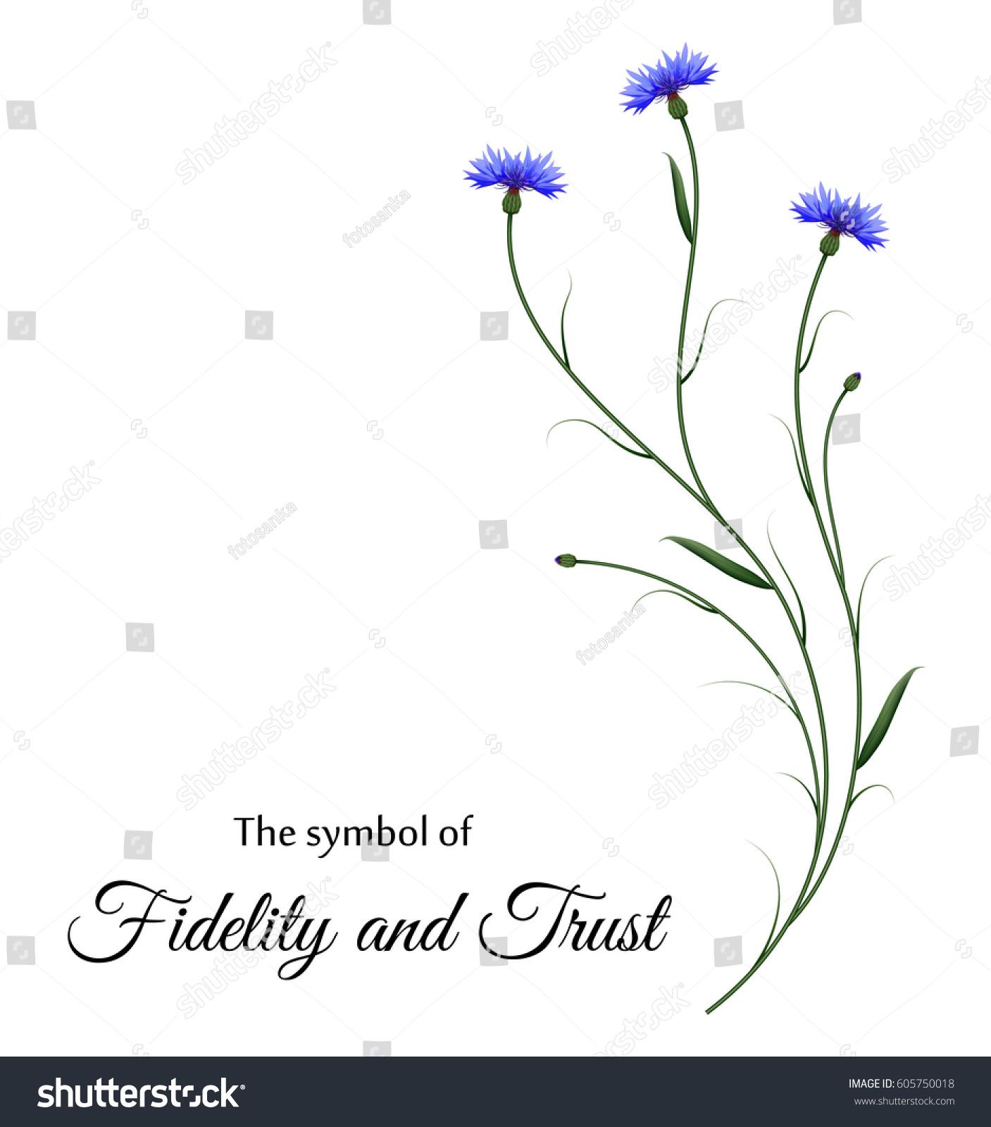 Realistic Cornflowers Symbol Fidelity Trust Stock Vector Royalty