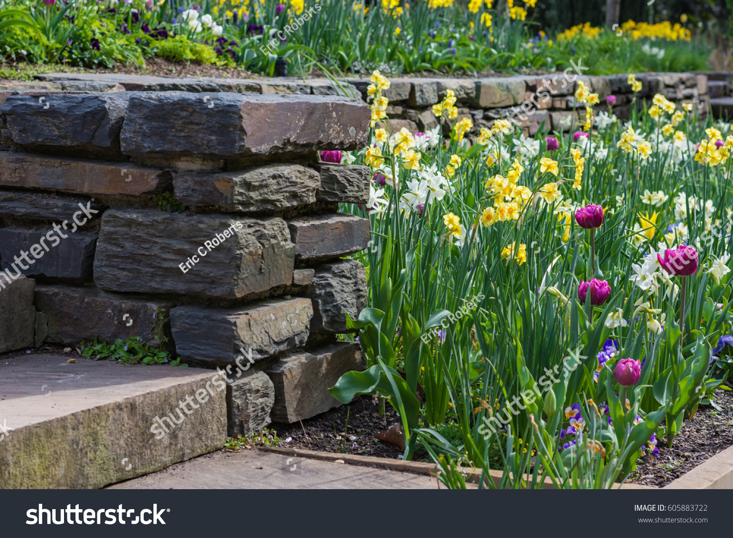 Botanical garden planting spring flowers by stock photo 100 legal botanical garden planting spring flowers by a stone wall at duke gardens mightylinksfo