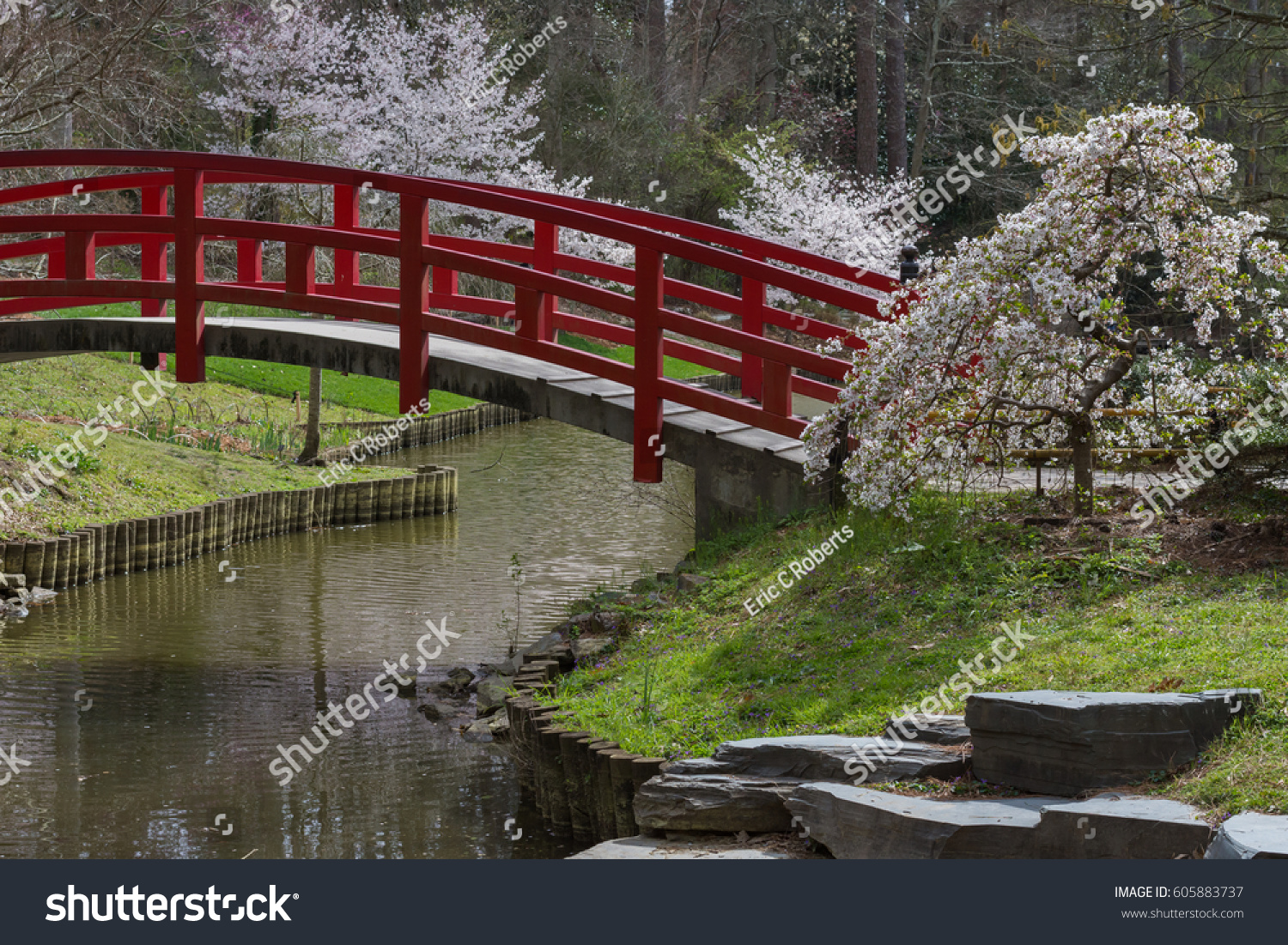 Amazing Japanese Garden Scene At Duke Gardens In Durham, NC. The Cherry  Blossoms Are