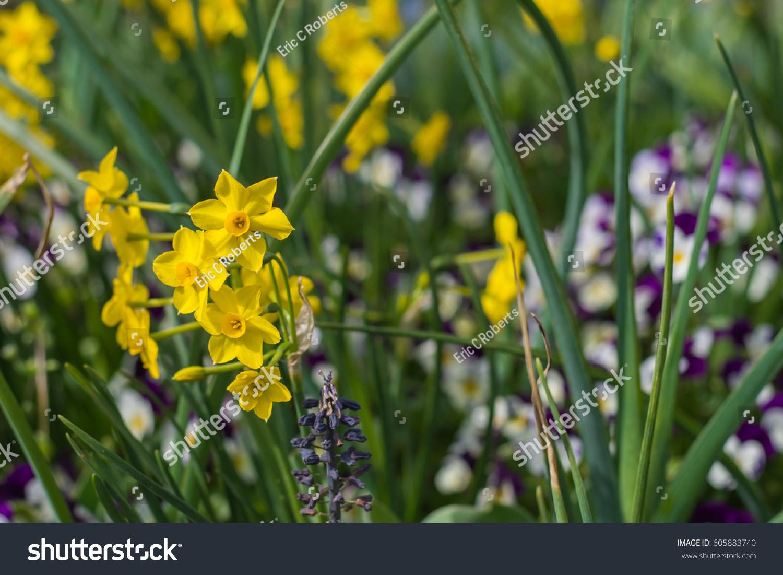 Spring Garden Flowers North Carolina Stock Photo Royalty Free