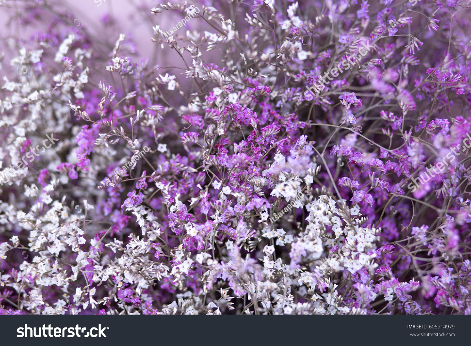 Cute Pattern Small Flower Small White Stock Photo Edit Now