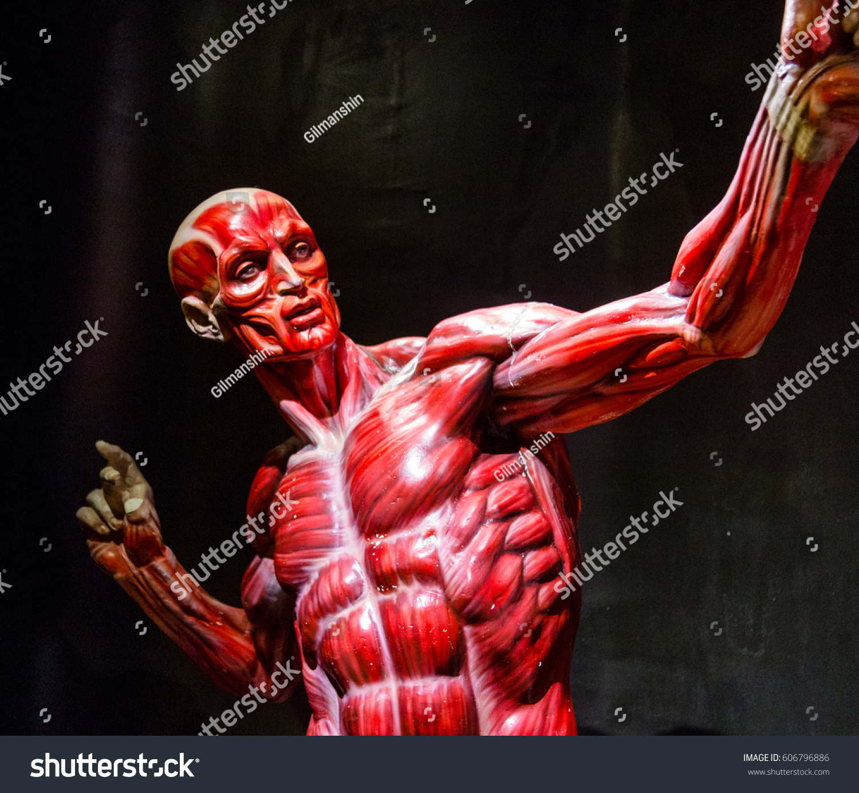 Human Muscles Anatomy Model On Black Stock Photo Edit Now
