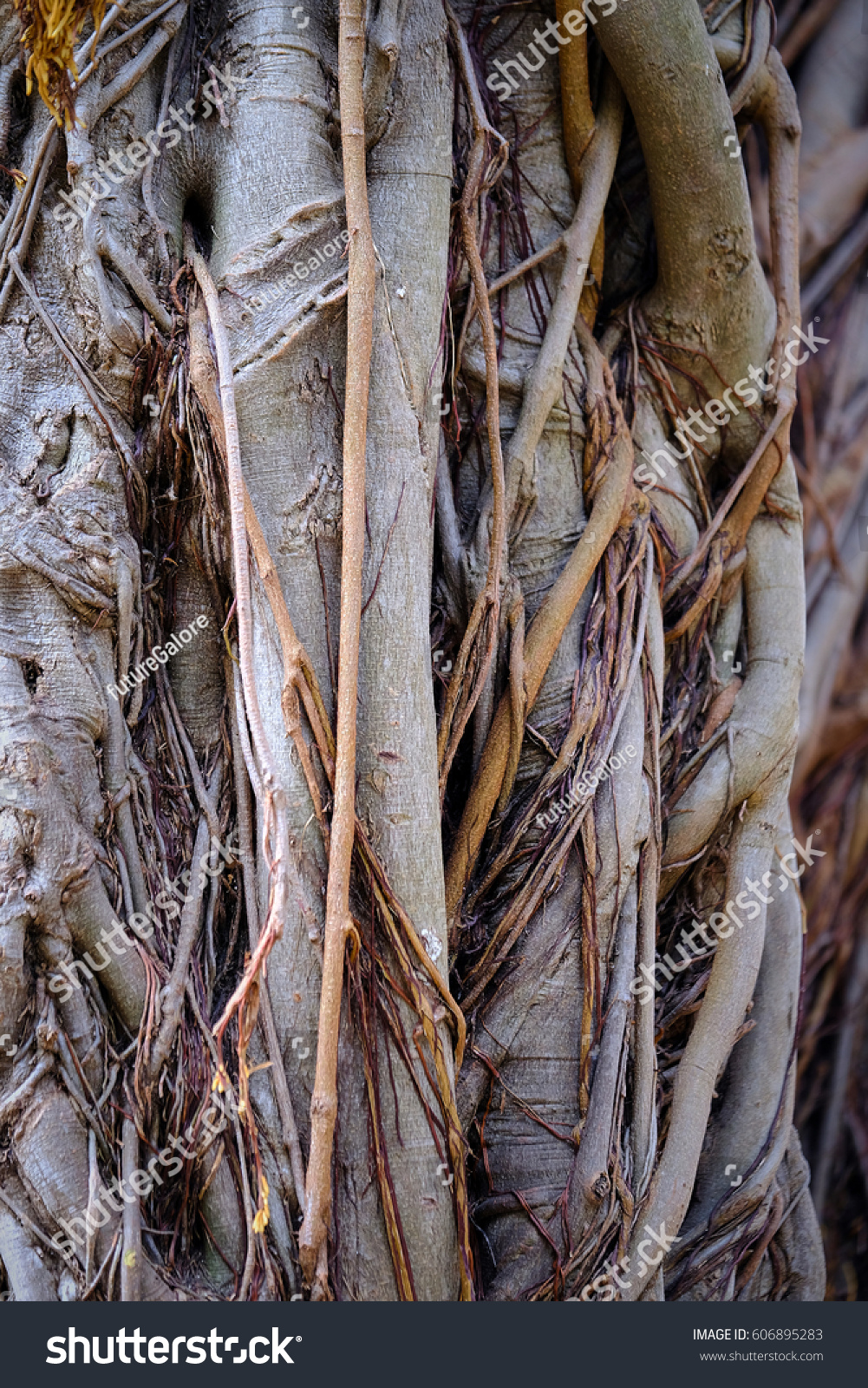 Magnolia Tree Roots Branches Background Stock Photo Edit Now 606895283