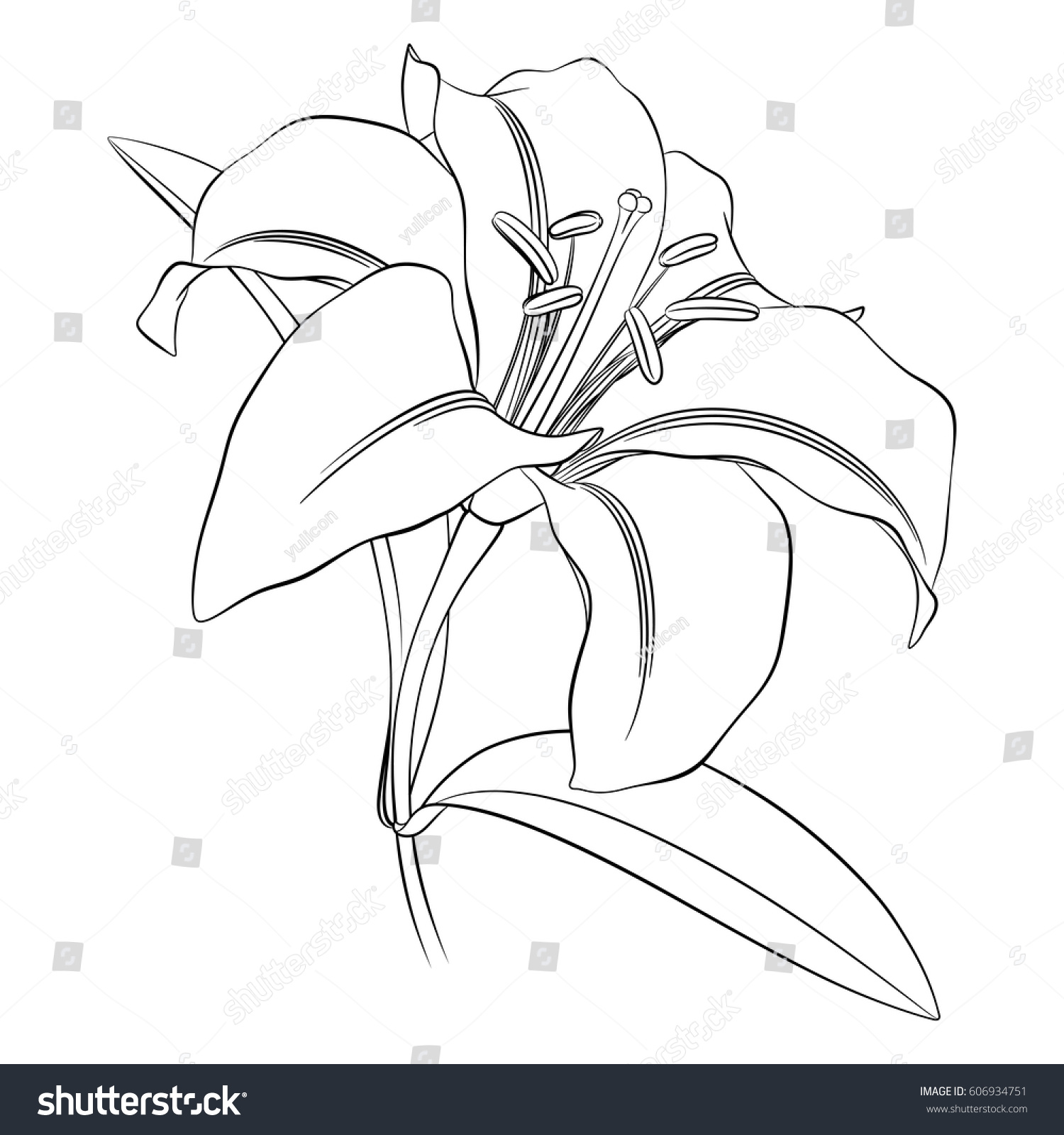 Black outline lily flower on white stock vector royalty free black outline of a lily flower on a white background for coloring izmirmasajfo