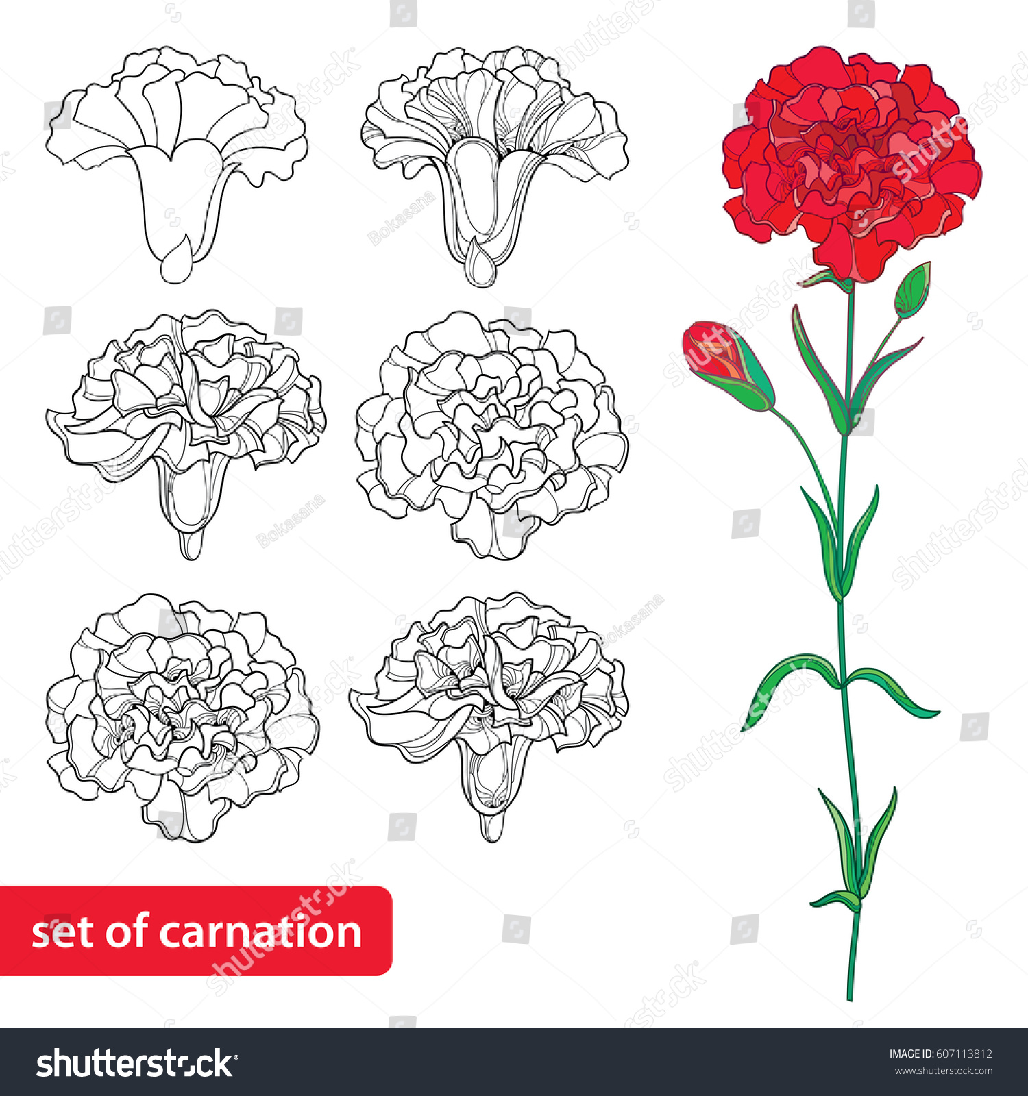 vector set outline carnation clove flower stock vector 607113812
