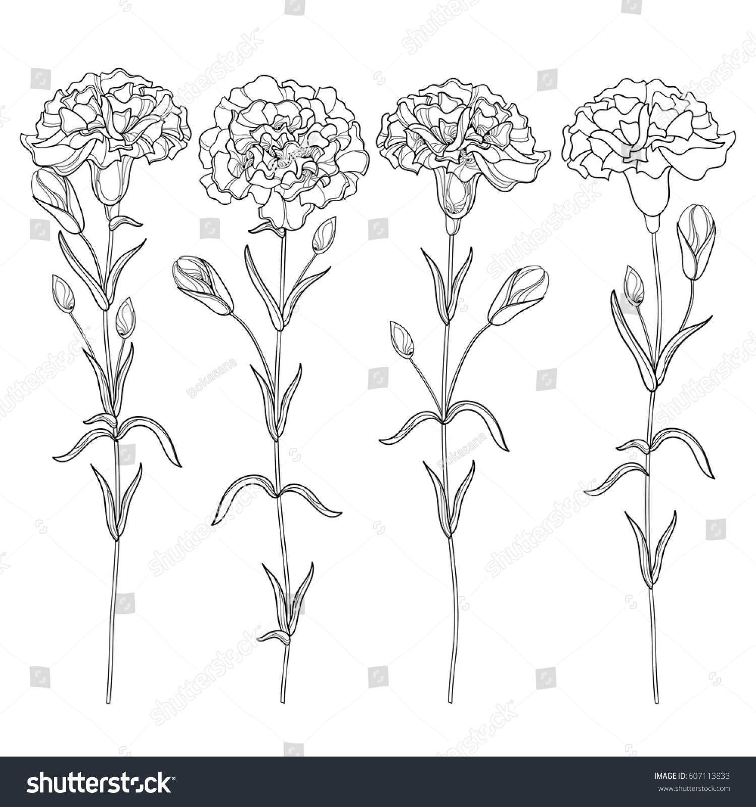 vector set outline carnation clove flower stock vector 607113833
