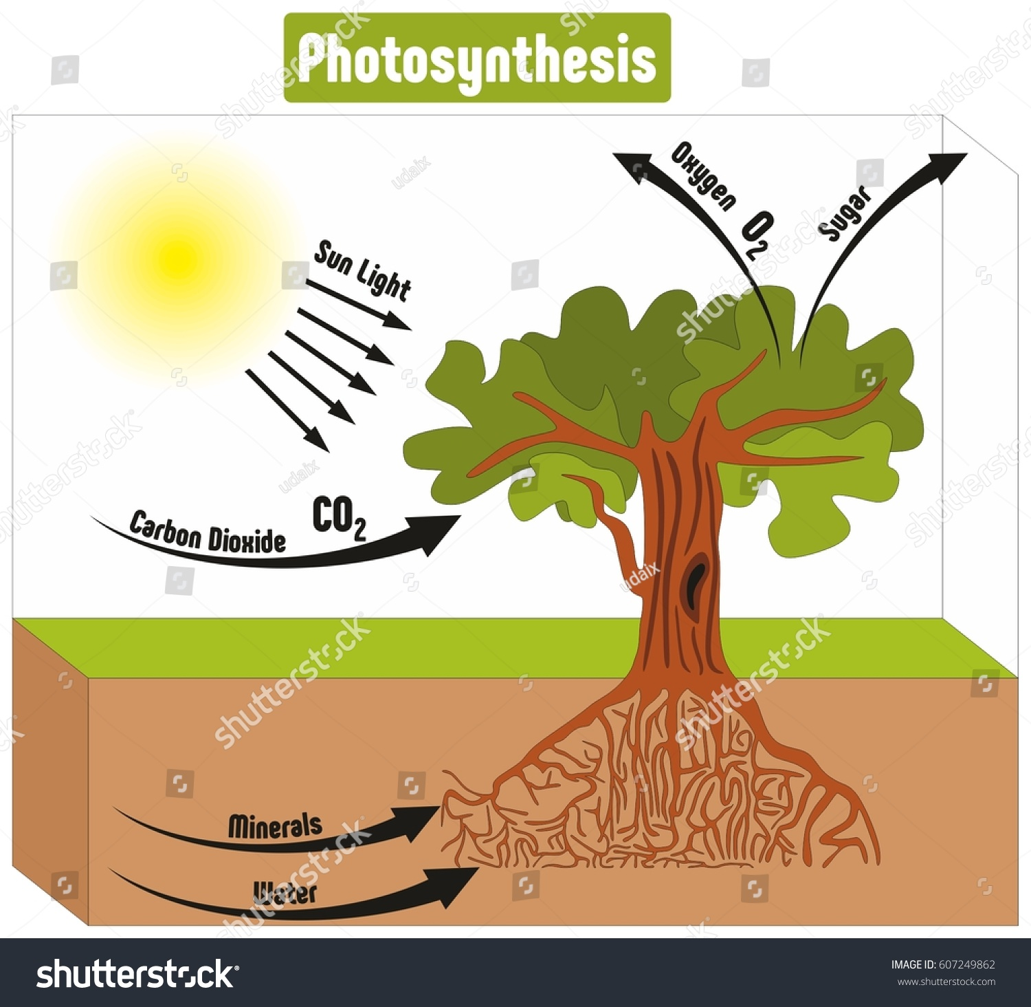 Plant Energy Transformations-Photosynthesis - GRKR aj. Org The site of photosynthesis in a plant is
