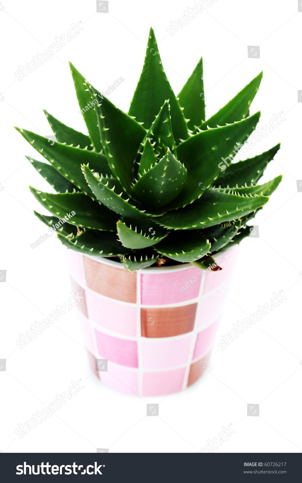 close ups of aloe vera plant on white background flowers and plants stock photo 60726217. Black Bedroom Furniture Sets. Home Design Ideas