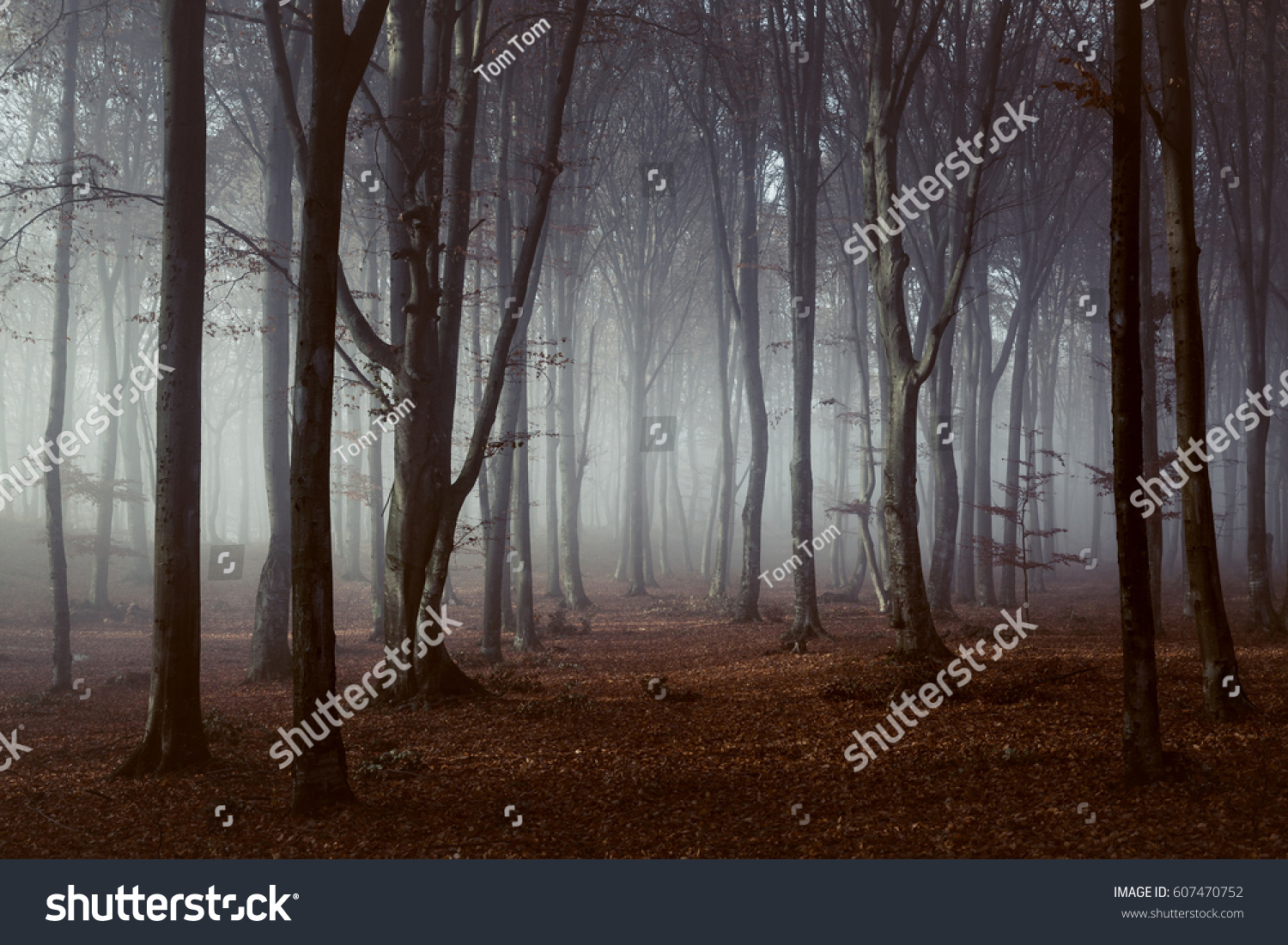 Spooky light in foggy forest #607470752