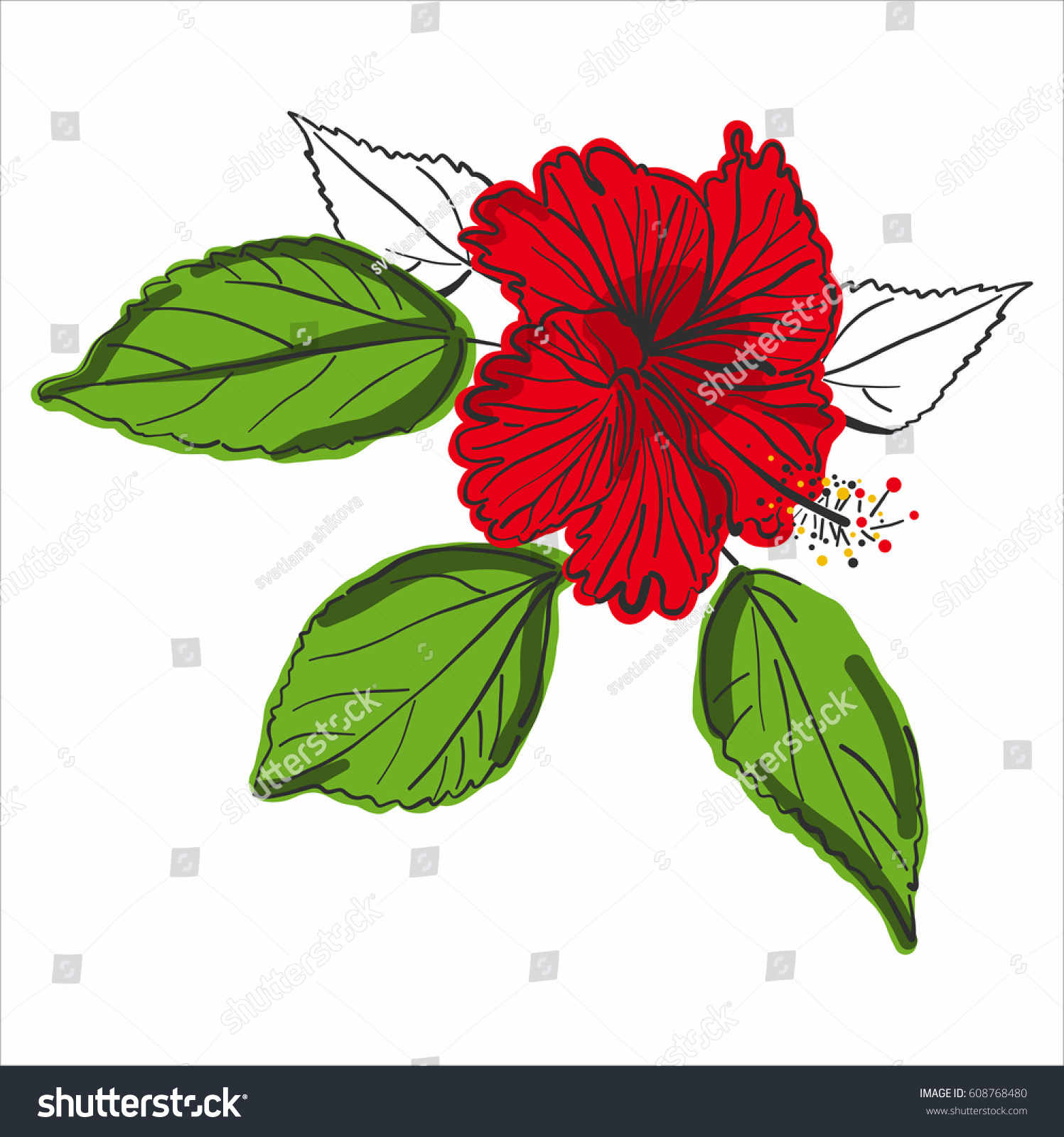 Red Flower Line Drawing : Vector line drawing red chinese rose stock