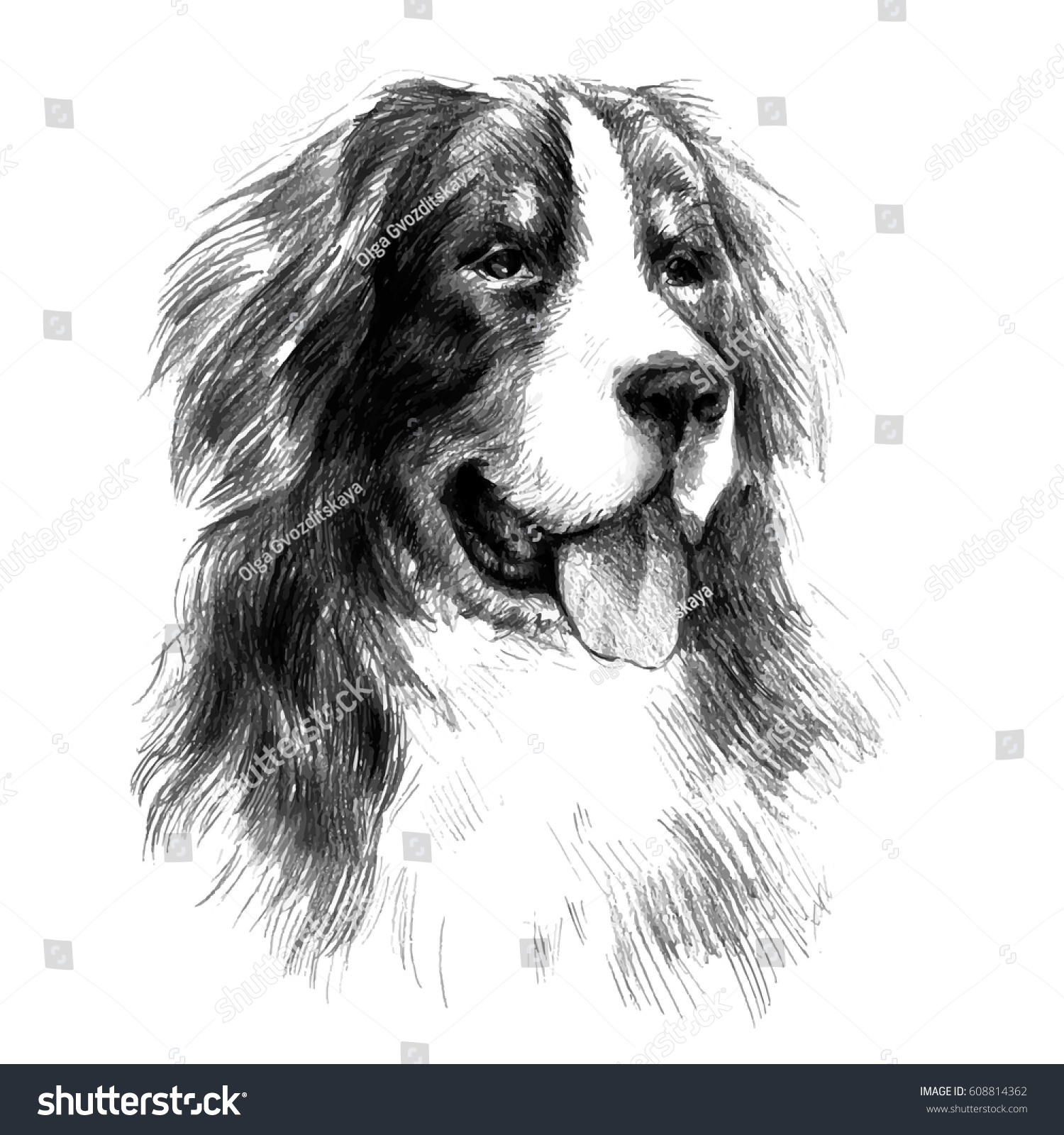 Bernese Mountain Dog Graphic Portrait Dog Stock Vector 608814362 - Shutterstock