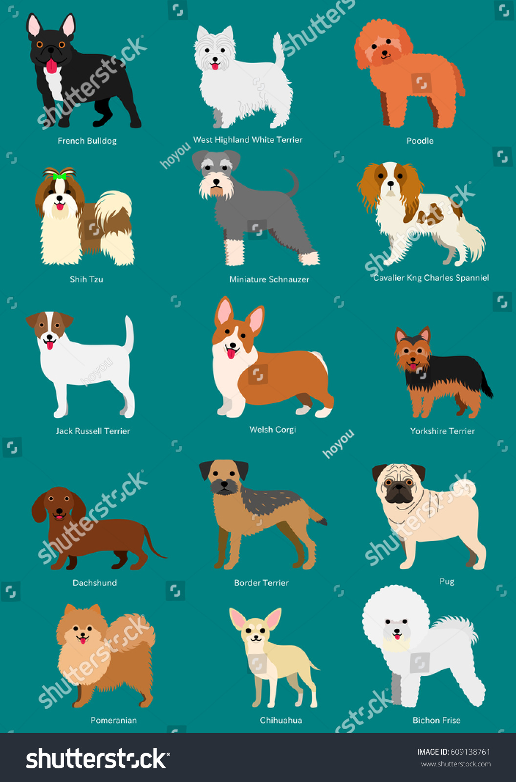 Small Dog Breeds Set Breeds Names Stock Vector Royalty Free 609138761