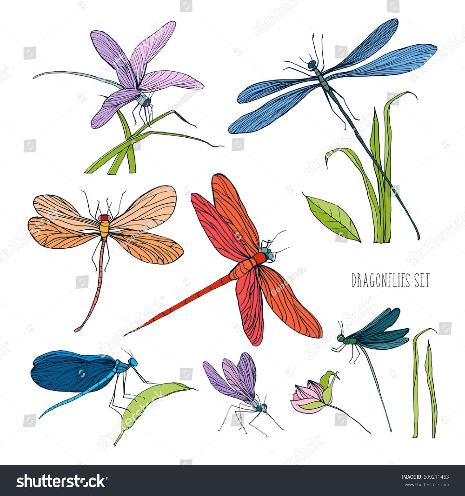 set various dragonflies different poses colorful stock vector