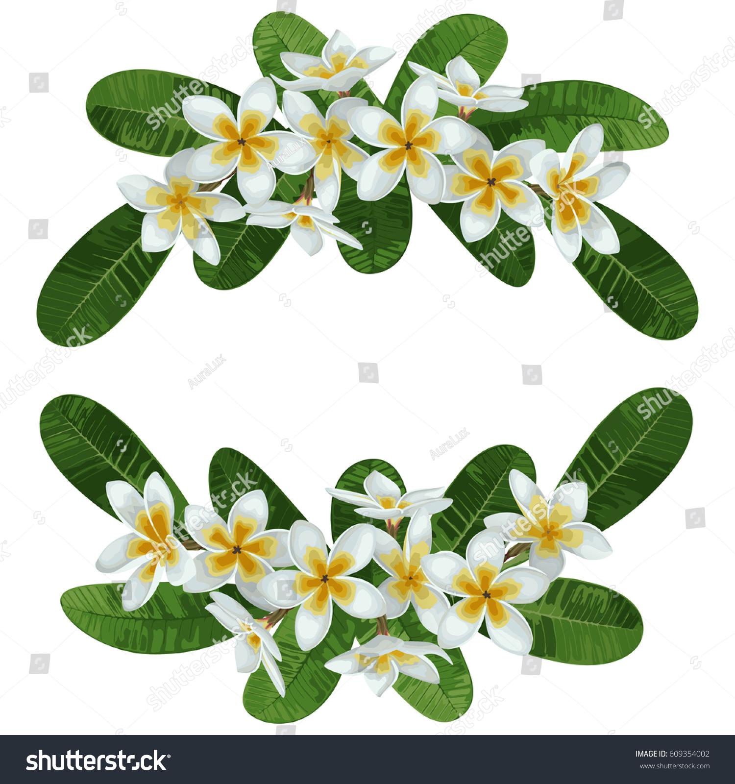 Pattern Tropical Flower Plumeria Leaves Tropic Stock Vector ...