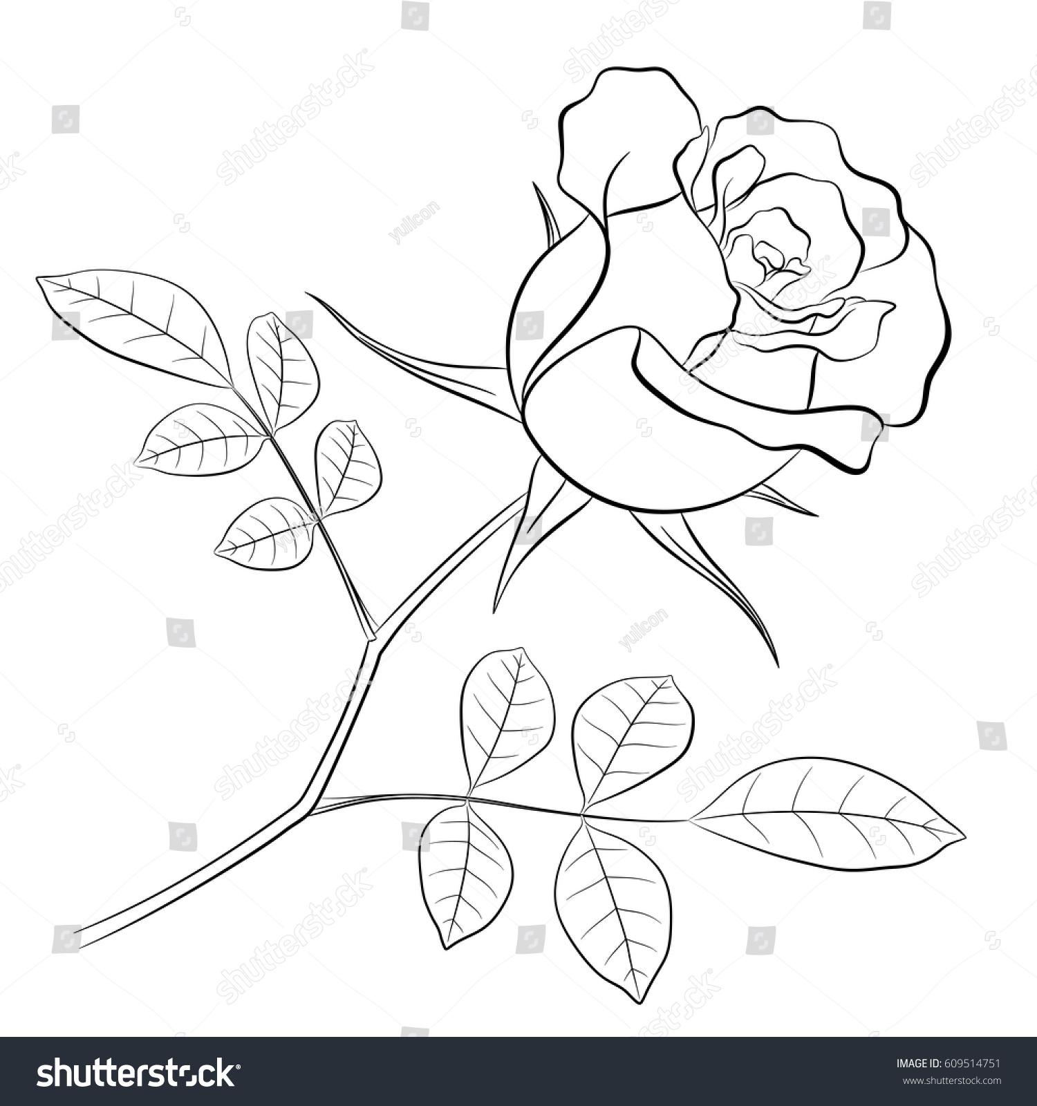 Black Outline Rose Flower Stem Two Stock Vector 609514751