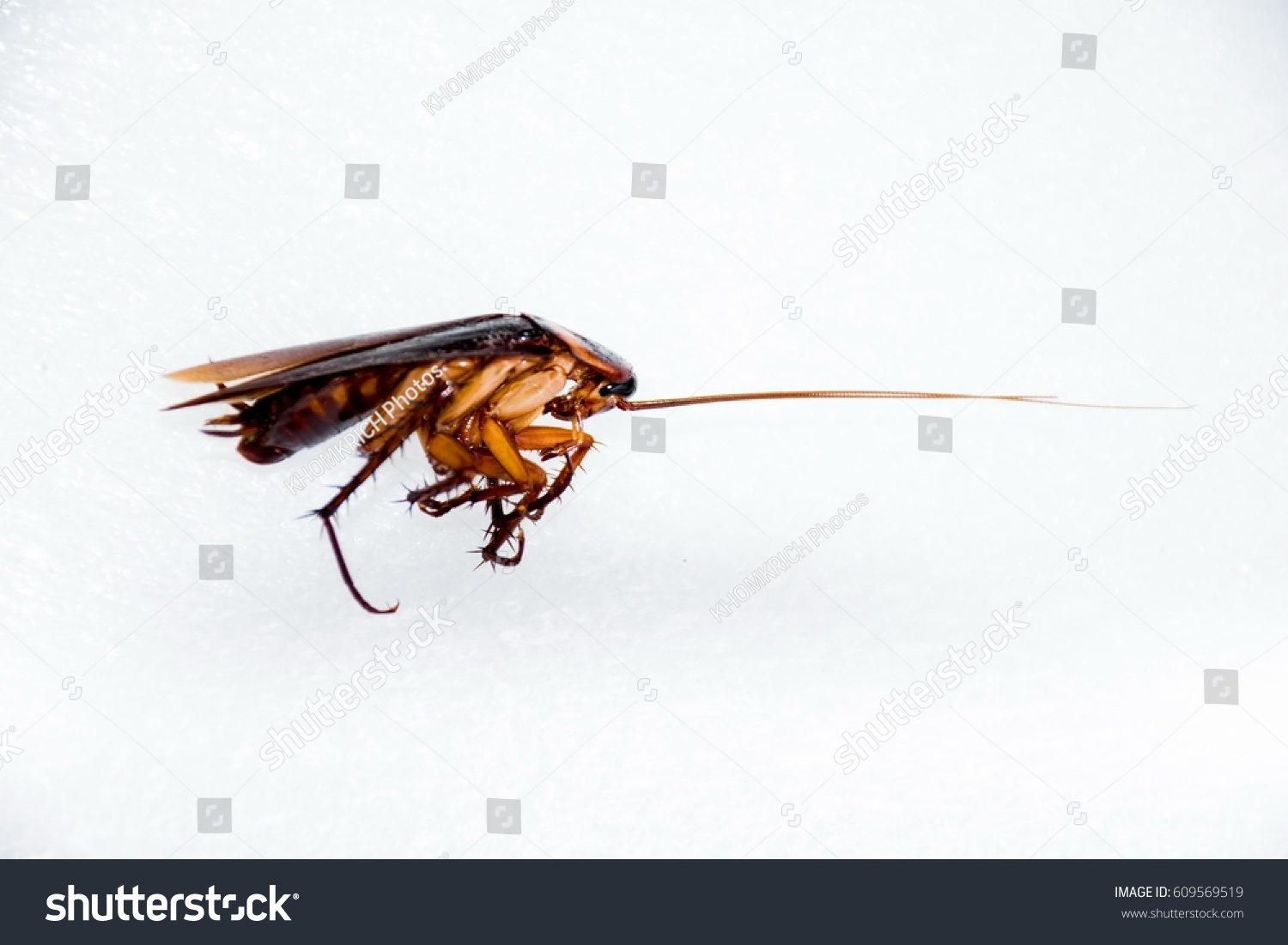 Cockroaches Dying Stock Photo (Royalty Free) 609569519 - Shutterstock